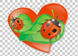 瓢虫昆虫博客,瓢虫PNG剪贴画食物,橙色,昆虫,封装的PostScript,水