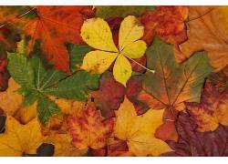抽象,秋季,亮,棕色,华美,绿色,树叶,枫叶,性质,橙子,模式,红,季节
