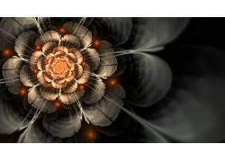 数字艺术,分形花,抽象,分形40284