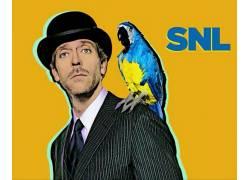 休劳瑞,简单的背景,领带,帽子,鹦鹉,动物,SNL,黄色背景,演员