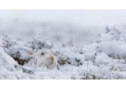 兔,动物,哺乳动物,性质,雪,冬季579517