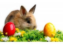 兔,小动物,蛋,复活节,动物388418
