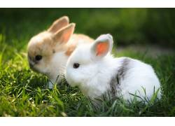 兔,景深,动物,草,模糊397319