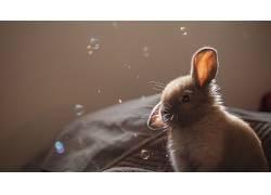 兔,泡泡,动物397081