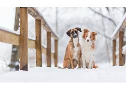 冬季,在户外,雪,动物,狗,桥492168