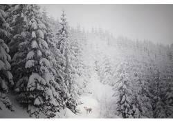 冬季,狗,动物,性质,树木630092