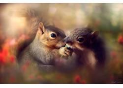 摄影,动物,一对,花卉,分享是关怀,背景虚化,松鼠407577图片