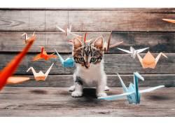 摄影,动物,猫,折纸,小猫371895图片