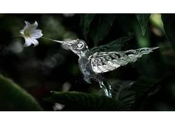 技术,数字艺术,鸟类,动物,花卉28223