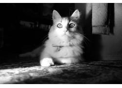 猫,单色,摄影,动物194763图片