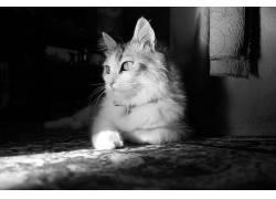 猫,单色,摄影,动物194764图片