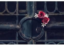 门,玫瑰,金属,锈,花卉,红色的花朵564370