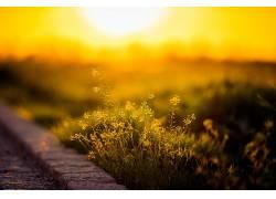 阳光,植物,景深,花卉,黄色的花朵,壁纸362916