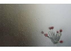 雨,水滴,红色的花朵,花瓶,植物,花卉,湿564375
