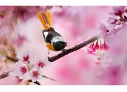 鸟类,景深,花卉,粉色的花朵,树枝122691
