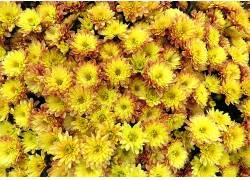 黄色,花卉,黄色的花朵,植物575945