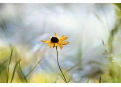 黄色的花朵,壁纸,花卉,植物555813