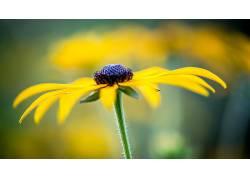 黄色的花朵,壁纸,花卉440433
