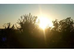 摄影,植物,壁纸,日落327848