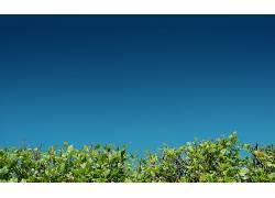 摄影,植物,壁纸,树叶,布什,鸭子狩猎327844