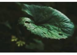 摄影,植物,壁纸317704