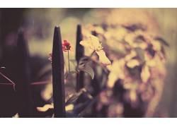摄影,植物,景深,篱笆,树叶325616