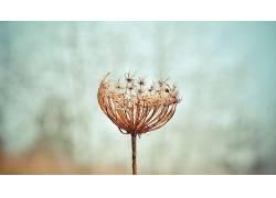 摄影,植物,景深487127