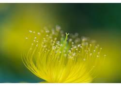 摄影,壁纸,宏,绿色,阳光,水滴,花卉394025
