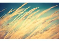 太阳,宏,小麦,植物,阳光5582