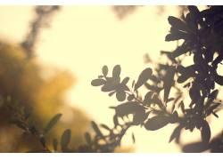 树叶,植物,阳光227969