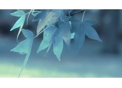 树叶,植物105979