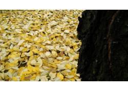 树叶,植物11397