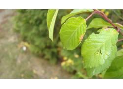 树叶,植物11399