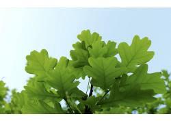 树叶,植物121859