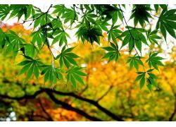 树叶,植物196869
