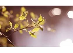 树叶,植物439527