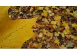 树叶,模糊,特写,植物11398