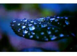 树叶,水滴,壁纸,植物116003