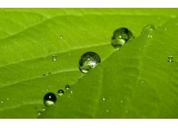 树叶,水滴,宏,植物19213