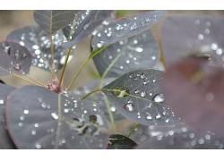 树叶,水滴,植物16307