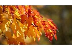 树叶,秋季,植物60489