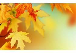 树叶,秋季,背景虚化,植物116028