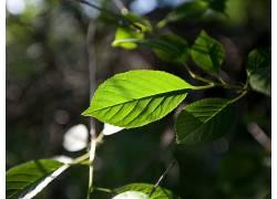 树叶,科,植物,宏3175