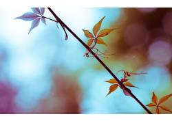 树叶,科,植物,宏3201