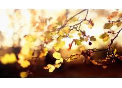 树叶,科,植物,特写,阳光,壁纸8963