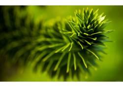 绿色,模糊,摄影,景深,自然光,壁纸,植物,肉质213153