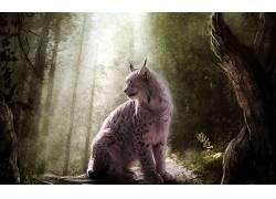 动物,猞猁,幻想艺术262500图片