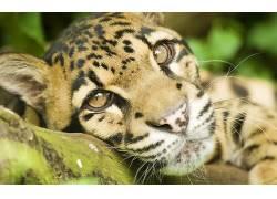 豹,动物,豹(动物)157214图片