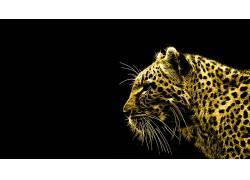 豹,动物,黑色的背景,Fractalius,豹(动物),数字艺术,简单的背景图片
