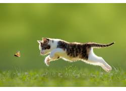 动物,猫,小动物,性质,赛跑,蝴蝶,草,景深,小猫161985图片